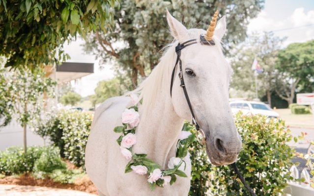 wedding-pets-post-image-horse